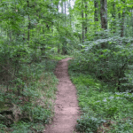 Birchmore Trail - Athens GA