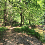Cook's Greenway Trail - Athens GA