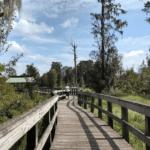 Trail Through Phinizy Swamp Nature Park in Augusta, GA