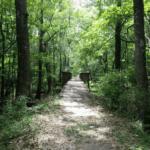 Savannah Ogeechee Canal Trail