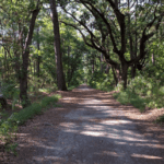 A Trail going through Skidaway Island State Park in Savannah GA