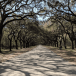 A Trail running through Wormsloe Historic Site in Savannah GA