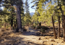 Jones-Whites Creek Trailhead